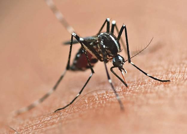 Morre adolescente de Marechal Cândido Rondon que estava com dengue